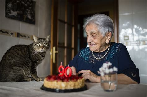 lifespan of a cat what is the life span of the common cat