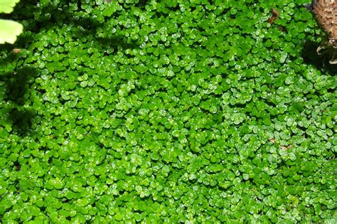 ground covering ground cover 1 by xistor on deviantart