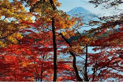 Autumn Trees Wallpapers Lake Leaf Fall Tree