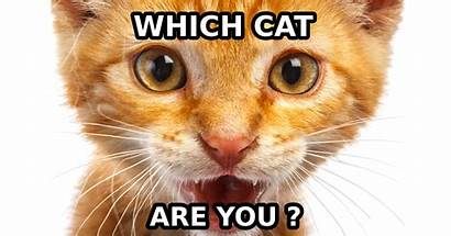 Cat Breed Which Funny Question