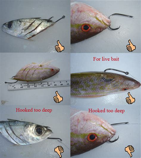 fishing grouper bait bottom rigs saltwater fish sea lures bass baits water hook fun surf crappie tips well crush helpful
