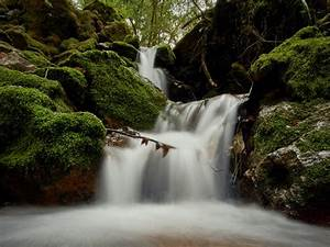 A, Mossy, Forest, Stream, In, Northern, California
