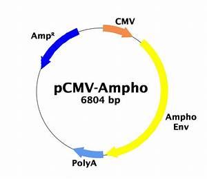 Amphotropic Envelope Vector