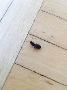 Ameisen Mit Flügel In Der Wohnung : schwarze k fer ameisen mit fl geln in der erde pflanzenkrankheiten sch dlinge green24 ~ Orissabook.com Haus und Dekorationen