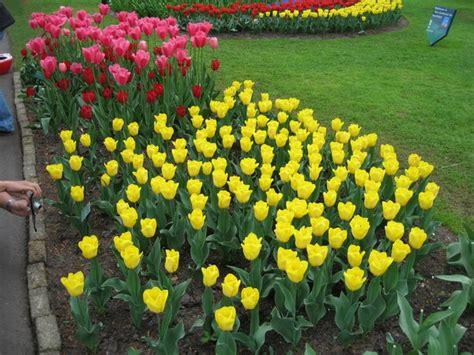taman bunga tulip  belanda property