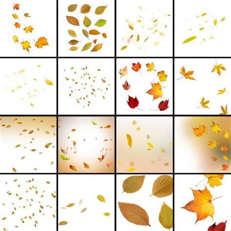 90 Autumn leaves overlay: falling maple leaves fall leaves ...