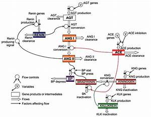 Role Of Ace Gene In Blood Pressure Control  Figure