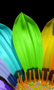 Free download Colorful flower Bright Colors Wallpaper ...