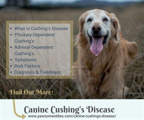 canine diseases bigcbit com agen resmi vimax hammer