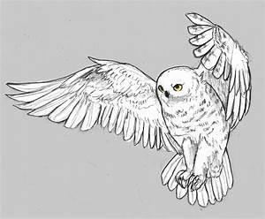 Snowy Owl Flying Drawing | www.imgkid.com - The Image Kid ...