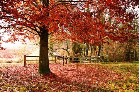 Stampe artistiche quadri e poster con alberi autunno
