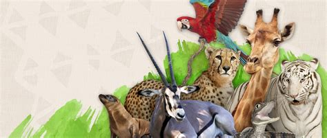 Home  Wildlife World
