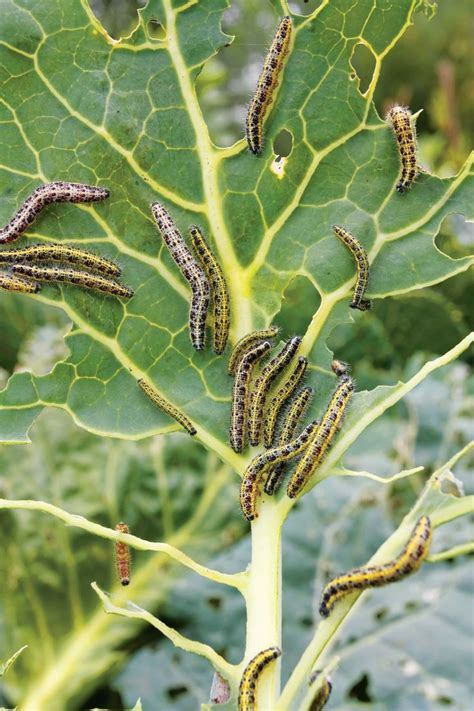 managing common garden pests what works what doesn t a nationwide reader survey reveals the