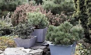Kuebelpflanzen Fuer Terrasse : winterharte k belpflanzen f r die terrasse wir bleiben drau en k belpflanzen winterhart ~ Orissabook.com Haus und Dekorationen