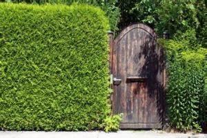 Dichte Schnellwachsende Hecke : hecken und fertig hecken als sichtschutz garten pflanzen ~ Whattoseeinmadrid.com Haus und Dekorationen