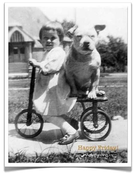 vintage pit   tricycle    dog  stronger