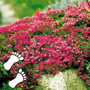 Blühende Pflanzen Winterhart : bodendecker winterhart ~ Michelbontemps.com Haus und Dekorationen