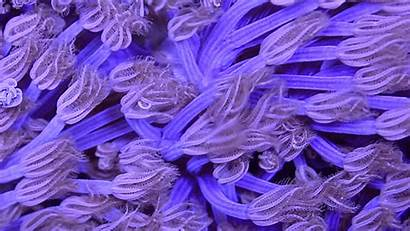 Coral Psychedelic Wired Motion Capture Yes Sea