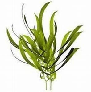 Algen Dünger Kaufen : mineralstoffe algen gesunde erg nzung online kaufen ~ Whattoseeinmadrid.com Haus und Dekorationen