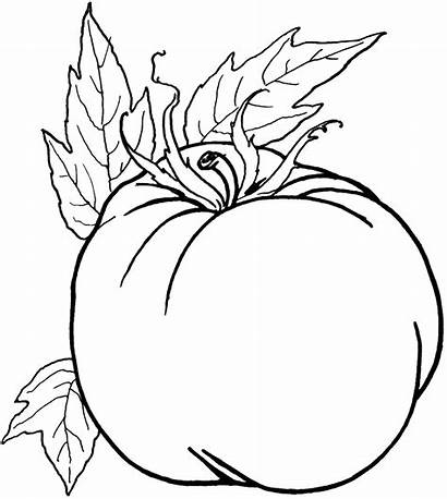 Vegetable Coloring Vegetables Pages Healthy Printable Line