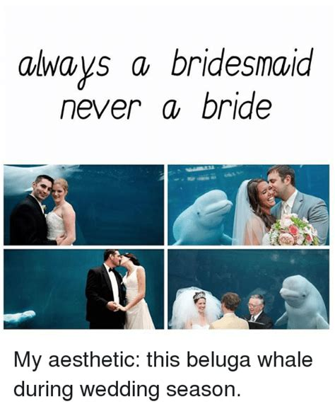 Bride To Be Meme - always a bridesmaid never a bride my aesthetic this beluga whale during wedding season