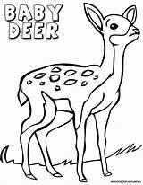 Deer Coloring Pages Baby Print Animal sketch template