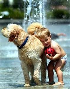 Bodenbelag Für Hunde Geeignet : goldendoodles und labradoodles was taugen die allergie hunde ~ Lizthompson.info Haus und Dekorationen