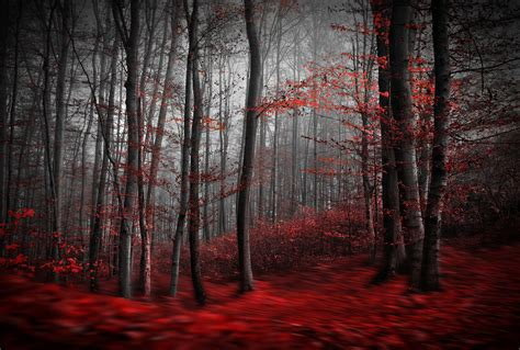 Rote Tapeten Wandgestaltung by Creepy Forest Wallpaper 66 Images