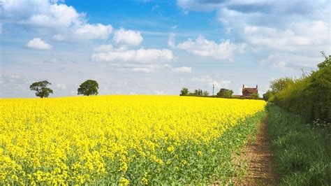 Background Crop Free Photo Agriculture Background Bloom Free Image On