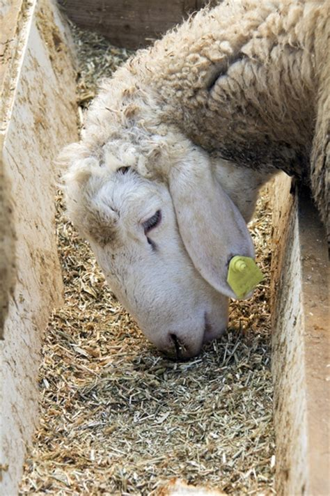 farm health  animal health  welfare knowledge
