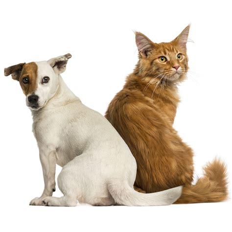 ernaehrung leberkranker hunde und katzen tierarzt dr hoelter