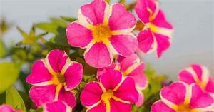 16 Showy  Colorful Annual Flowers Screaming  U201clook At The
