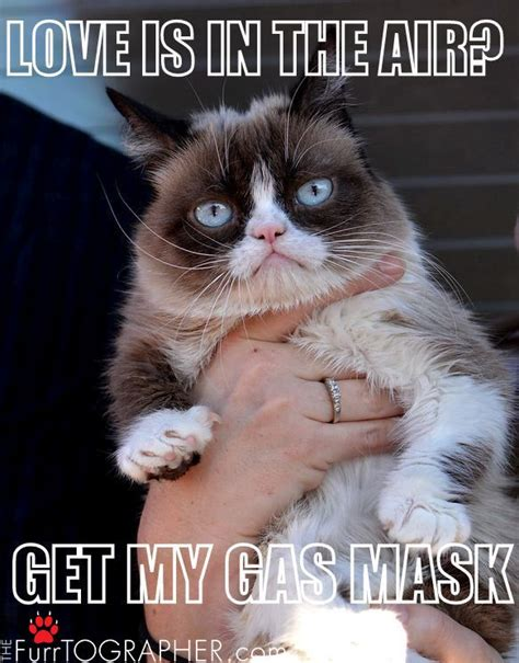 Grumpy Cat Meme Valentines Day - 823 best images about grumpy cat on pinterest cats grumpy cat quotes and daylight savings time