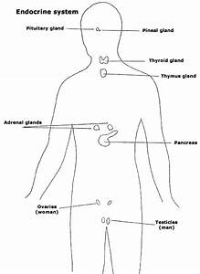 Life Sciences  The Functions Of The Endocrine Glands