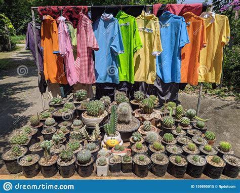 Cactus Garden In Thailand Watercolor Desert Flowers And ...