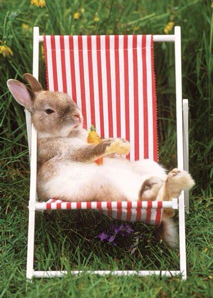 funny rabbit resting   sun chair luvbat