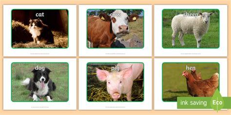 animal farm pig farm animal display photos farm animals display photos