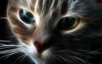 Cool Cat Chat Pc Tablettes Ecran Fonds