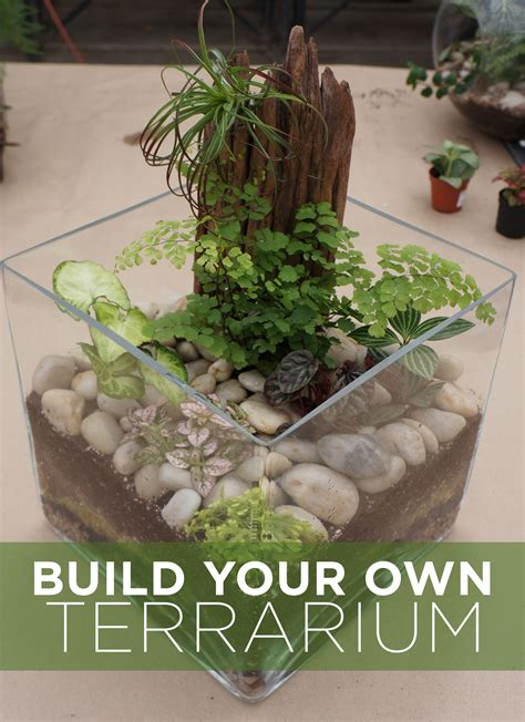Build Your Own Terrarium Tutorial  Westwood Gardens Blog