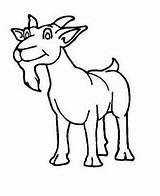 Coloring Beard Disimpan Dari Goats sketch template