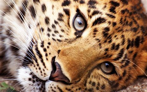 Live Animal Wallpaper App - animals live wallpaper apk free personalization