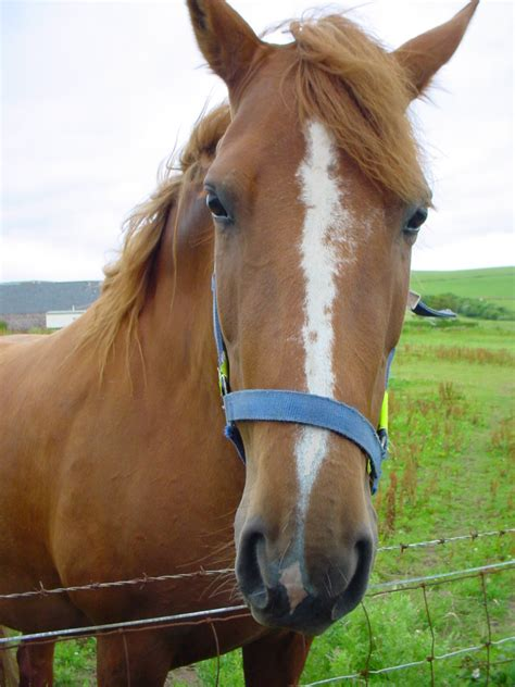 horse horses animal pet pets lovers friendly welcome space owners having incidentally appreciate because there quantum linguistics yourpetspace info