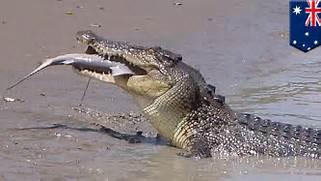 Brutus Crocodile