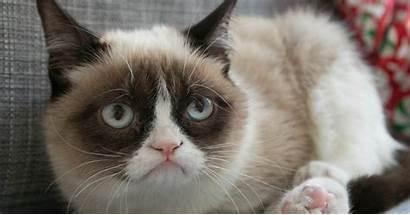Cat Grumpy Meme Cats Kitty Face Christmas