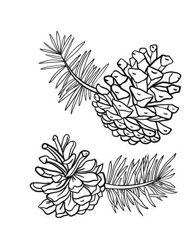 printable pine cone coloring page
