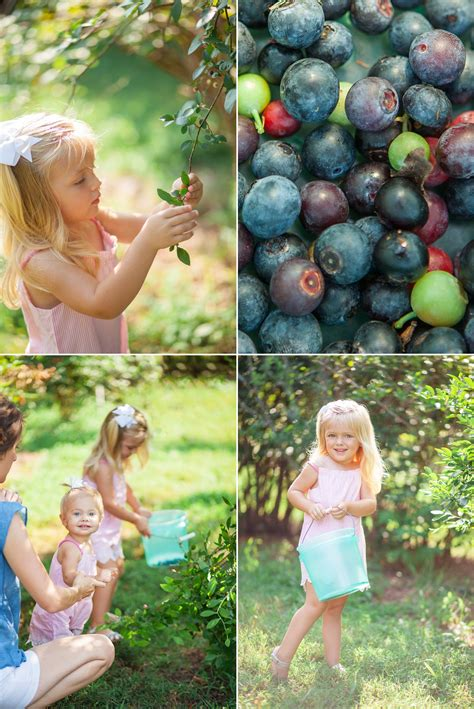 blueberry patch photo shoot franklin tennessee krista