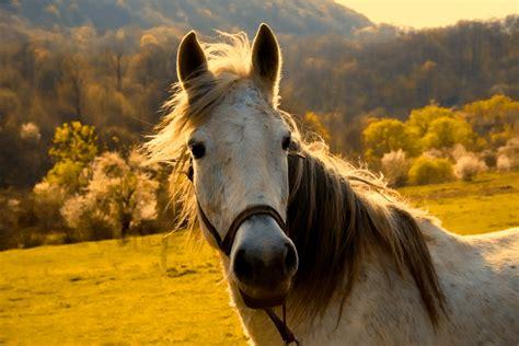 horses calming pastes horse rider