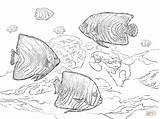 Coloring Angelfish Pages Koran Drawing Printable sketch template