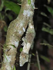 Amazing Natural Camouflage  18 Pics