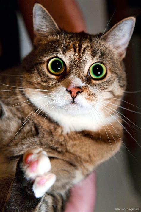 Katze Socke überziehen